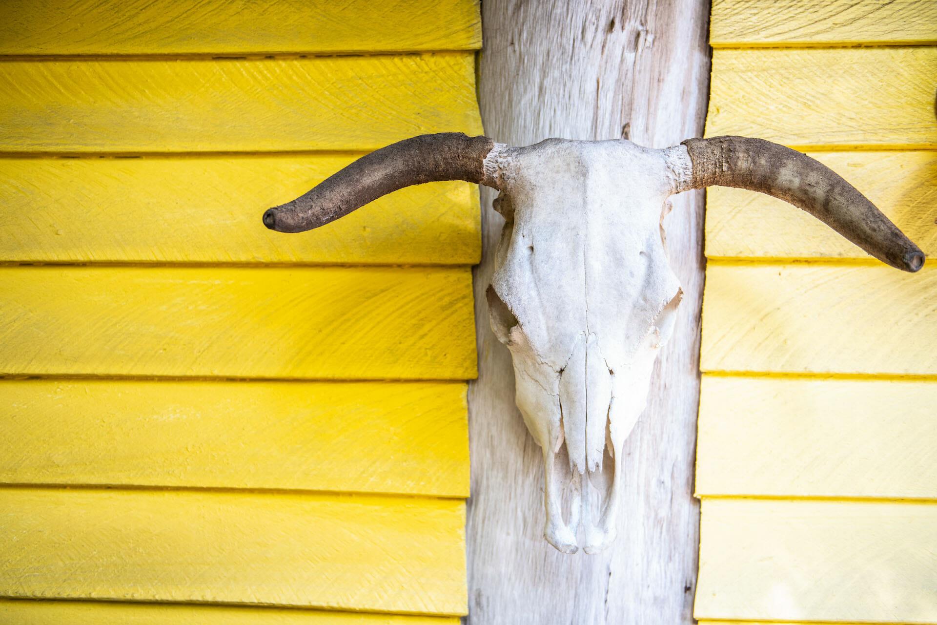 Sunbaked Cattle Skull on Frangipani House 1920 x 1280