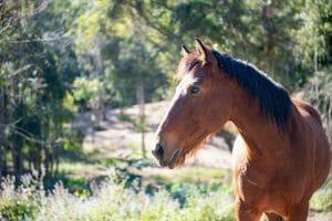 Beautiful Brown Horse 1920 x 1280