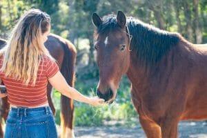 Girl Feeding Beautiful Brown Horse 1920 x 1100