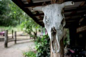 Sun Baked Cattle Skull 1920 x 1280